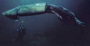 Calamar-colosal Animales Descubiertos Recientemente