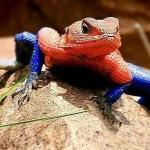 Los 10 Reptiles más extraños del mundo