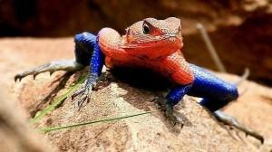 10 Reptiles más extraños del mundo