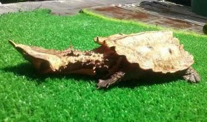 4 Tortugas extrañas