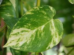 7 plantas venenosas para animales