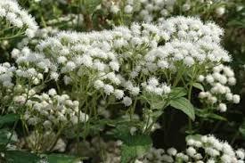 9 Plantas venenosas