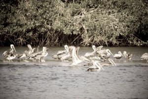 5.- Estero de Jaltepeque y la Costa del Sol turísticos que debes visitar en El Salvador