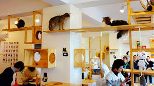 10 Datos curiosos sobre los gatos