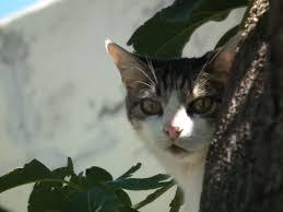 6 Datos curiosos sobre los gatos
