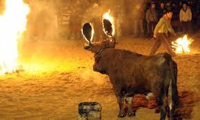 7 Fiestas más crueles en las que son maltratados animales