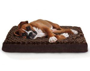 10 mejores camas para perros