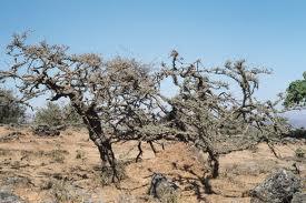 Mejores desiertos del mundo - El desierto mas grande del mundo - Desiertos calientes