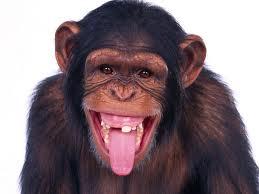 Los Chimpancés no están desnudos Cosas que debes saber sobre el cabello humano
