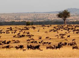 Serengeti Maravillas Naturales del Mundo