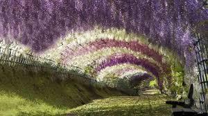Wisteria Túnel Cuevas más Raras del mundo