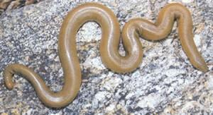 6 Serpientes de gomas