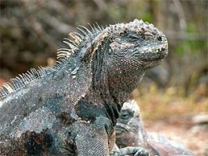 9 Reptiles extraños