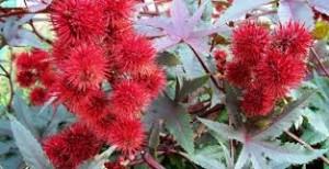5 Las plantas que causan más muertes