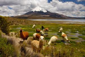 Parque Nacional Lauca Lugares para visitar en Chile