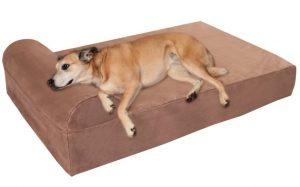 2 mejores camas para perros