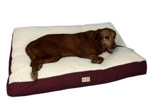 3 mejores camas para perros